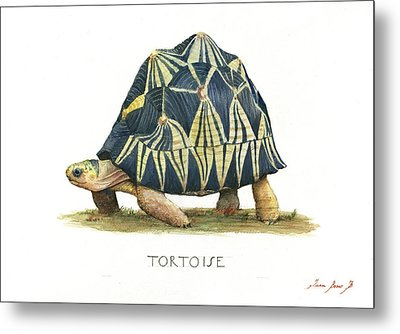 Radiated Tortoise  Metal Print by Juan Bosco
