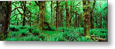 Rain Forest, Olympic National Park Metal Print by Panoramic Images