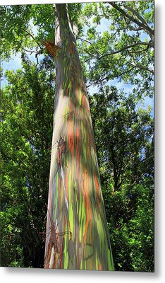 Rainbow Tree Metal Print by Pierre Leclerc Photography
