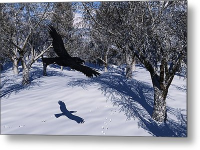 Raven Tracking Metal Print by Diana Morningstar