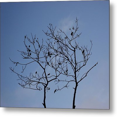 Reach For The Sky Metal Print by Marilynne Bull