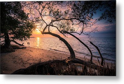 Reaching For The Sun Metal Print by Marvin Spates