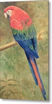 Red And Blue Macaw Metal Print by Henry Stacey Marks