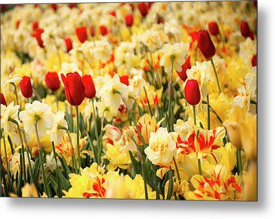 Red And Yellow Metal Print by Tamyra Ayles