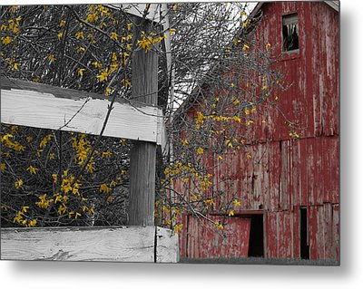 Red Barn And Forsythia Metal Print by Dylan Punke