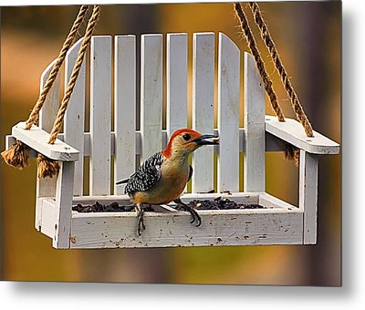Red Bellied On Swing - 5 Metal Print by Bill Tiepelman