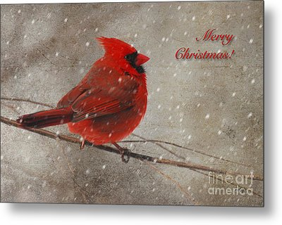 Red Bird In Snow Christmas Card Metal Print by Lois Bryan