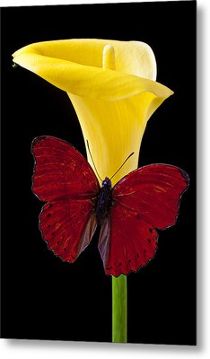 Red Butterfly And Calla Lily Metal Print by Garry Gay