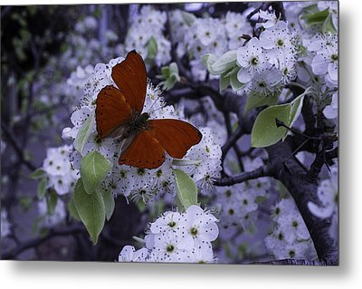 Red Butterfly On Cherry Blossoms Metal Print by Garry Gay