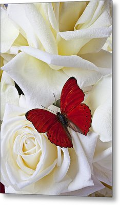 Red Butterfly On White Roses Metal Print by Garry Gay
