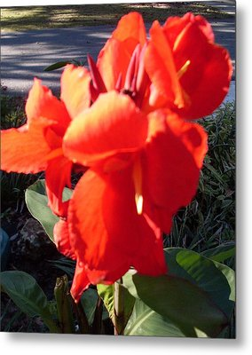 Red Canna Lily Metal Print by Warren Thompson