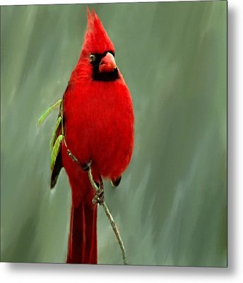 Red Cardinal Painting Metal Print by Bob and Nadine Johnston