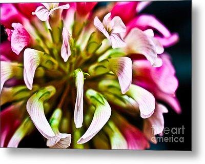 Red Clover Flower Metal Print by Ryan Kelly