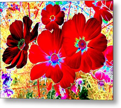 Red Cosmos Metal Print by Will Borden