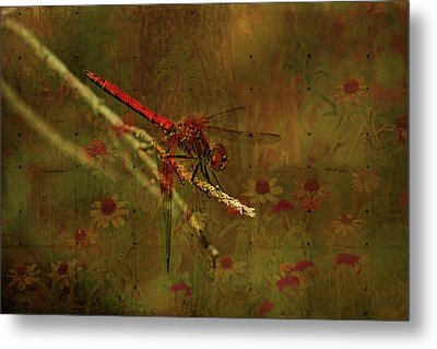 Red Dragonfly Dining Metal Print by Bonnie Bruno