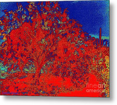 Red Palo Verdi Metal Print by Summer Celeste