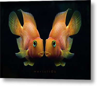 Red Parrot Fish Metal Print by MariClick Photography