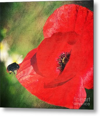 Red Poppy Impression Metal Print by Angela Doelling AD DESIGN Photo and PhotoArt