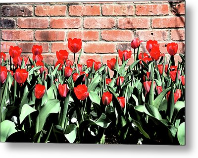 Red Spring Tulips 2 Metal Print by Angelina Vick