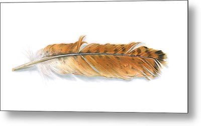 Red-tailed Hawk Feather Metal Print by Logan Parsons