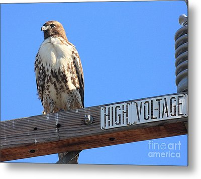 Red Tailed Hawk On High Voltage Metal Print by Wingsdomain Art and Photography