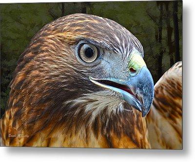 Red-tailed Hawk Portrait Metal Print by Sandi OReilly