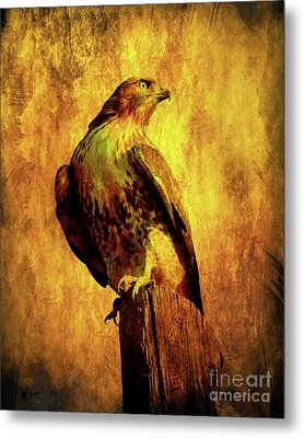 Red Tailed Hawk . Texture . 40d10167 Metal Print by Wingsdomain Art and Photography