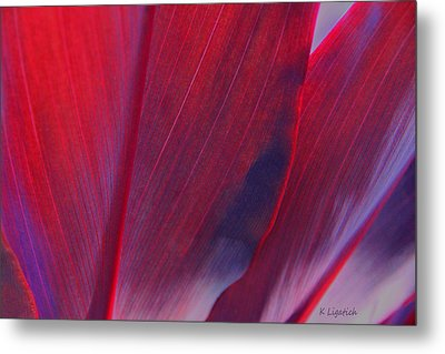 Red Ti Leaves At Last Light Metal Print by Kerri Ligatich