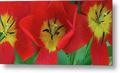 Red Tulip Trio Metal Print by Ben and Raisa Gertsberg