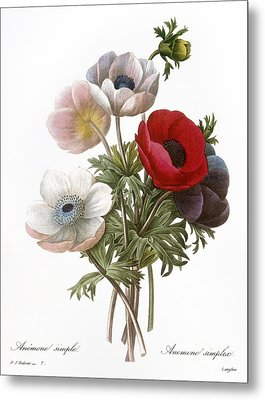 Redoute: Anemone, 1833 Metal Print by Granger