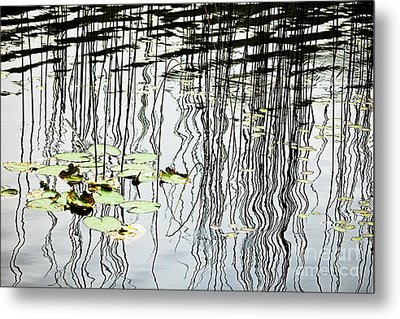 Reeds And Reflections Metal Print by Dave Fleetham - Printscapes