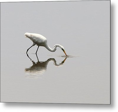 Reflecting Egret Metal Print by Al Powell Photography USA