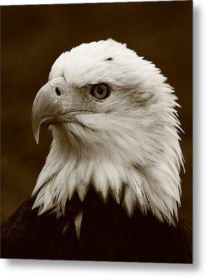 Regal  Eagle Metal Print by Bruce J Robinson
