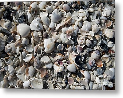 Remnants Metal Print by Terri Winkler