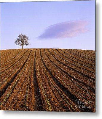 Remote Tree In A Ploughed Field Metal Print by Bernard Jaubert