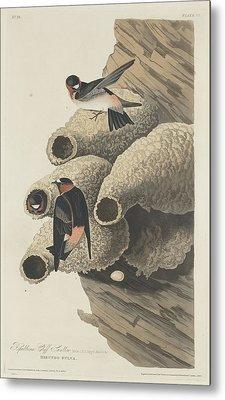 Republican Cliff Swallow Metal Print by John James Audubon