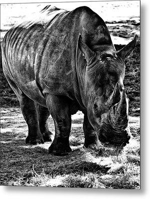 Rhinoplasty Metal Print by Sarita Rampersad