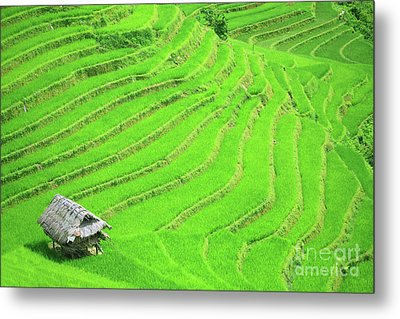 Rice Field Terraces Metal Print by MotHaiBaPhoto Prints