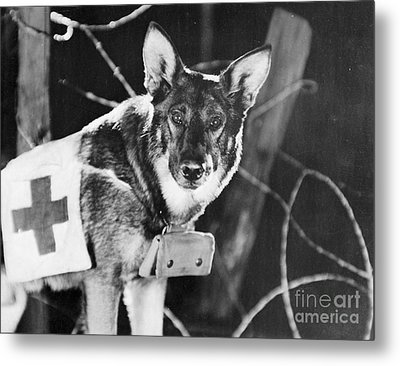 Rin-tin-tin (1916-1932) Metal Print by Granger