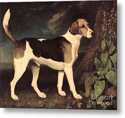 Ringwood Metal Print by George Stubbs
