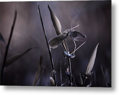 Rise Of The Guardian Metal Print by Fabien Bravin