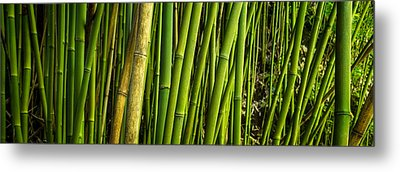 Road To Hana Bamboo Panorama - Maui Hawaii Metal Print by Brian Harig