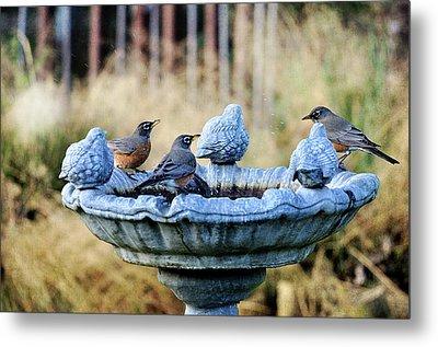 Robins On Birdbath Metal Print by Barbara Rich