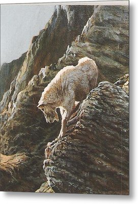 Rocky Mountain Goat Metal Print by Steve Greco