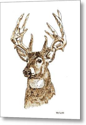 Rocky Mountain Mule Deer Metal Print by Pat Sloss