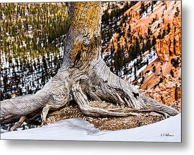 Roots Gripping The Edge Metal Print by Christopher Holmes