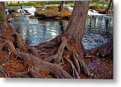 Roots On The River Metal Print by Stephen Anderson