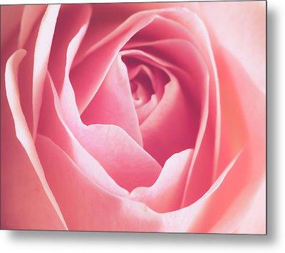 Rosa Metal Print by Wim Lanclus