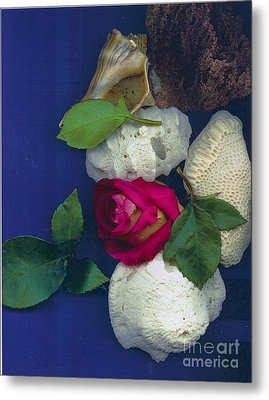 Rose Corals Shell Metal Print by Leonor Shuber