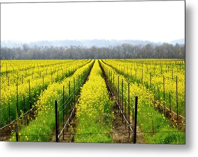 Rows Of Wild Mustard Metal Print by Tom Reynen